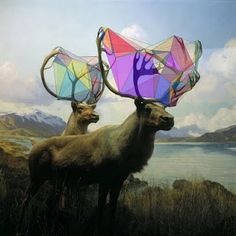 It is as if they had dunked their antlers into a giant bubble vat and are now waiting for the wind to blow bubbles.