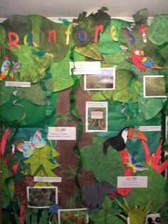 Great 3-D rainforest biome