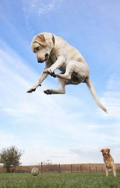 Este salta más que Miko jaajaja