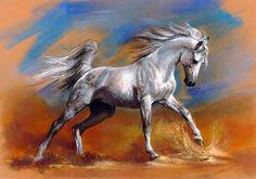 Image result for arabian horse running