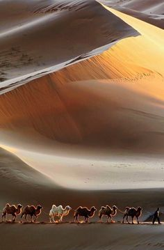 Pictures Of Nature Beautiful Desert And Camels Cool Pictures, Cool Photos, Beautiful Pictures, Beautiful World, Beautiful Places, Beautiful Sky, Landscape Photography, Nature Photography, Travel Photography