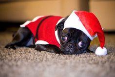 Santa Pug Puppy
