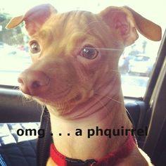 """Tuna, """"OMG....a Phquirrel!"""""""
