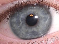 Gray eye by Nick4gwen found on Wikipedia at this link:  http://en.wikipedia.org/wiki/Image:Mybluishgrayeye.JPG.  Released by its author Nick4gwen into the public domain.
