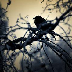 photographer - Sally Mann