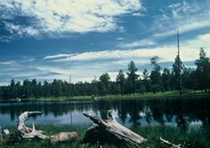 The White Mountains in AZ include Showlow, Taylor, Snowflake, Pinetop-Lakeside and the Apache White Mountains. Outdoor activities range from skiing to biking to hiking and more!
