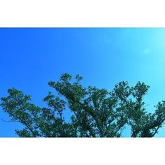 【min030100】さんのInstagramをピンしています。 《☺︎ 2017/02/13 . . #my#color #sky#sea#flower#nature  #okinawa #camera#nikon#nikond5500  #色#青#空#海#花#緑#自然 #沖縄 #カメラ#一眼レフ#ニコン #写真#過去pic#カメラ女子 #カコソラ #ダレカニミセタイソラ #写真好きな人と繋がりたい #写真撮ってる人と繋がりたい #ファインダー越しの私の世界 . . #わたし色の世界》