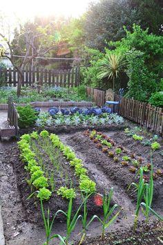 40 Stunning Vegetable Garden Design Ideas Perfect For Beginners – – Gardening for beginners and gardening ideas tips kids Vegetable Garden For Beginners, Backyard Vegetable Gardens, Potager Garden, Veg Garden, Vegetable Garden Design, Garden Cottage, Fruit Garden, Edible Garden, Gardening For Beginners