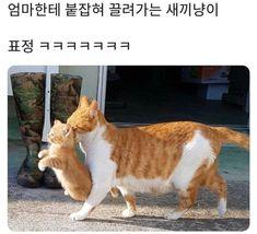 Punny Puns, Cute Cat Memes, Cute Photos, Big Cats, Neko, Animal Pictures, Funny Animals, Corgi, Kitty
