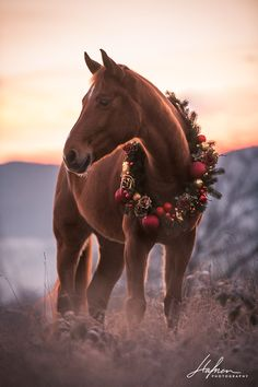 Dog and Horse Photography – Creative and Timeless Cute Horses, Pretty Horses, Horse Love, Beautiful Horses, Equine Photography, Animal Photography, Nature Photography, Christmas Horses, Christmas Animals
