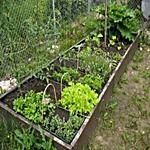 3 Tips For Maximizing Space In A Small Vegetable Garden