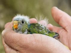 Perth, Australia's Birds of the South-West Baby Boom! - ZooBorns