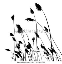 real reed silhouette - vector illustration - traced two colors white and black
