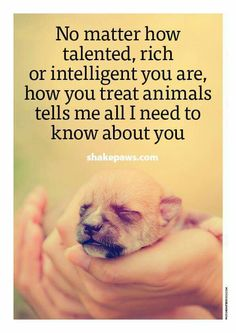 How you treat animals tells me more about you than degrees or your bank account statements.