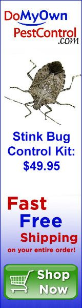 How to Fight Stink Bugs in Your House - STOP STINK BUGS! - Get rid of brown marmorated stink bugs