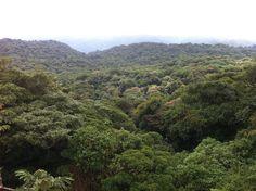 Los 10 bosques más mágicos del mundo (FOTOS)