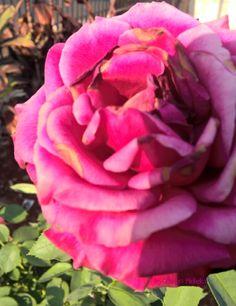 A cor envelhecida apenas dá uma outra beleza.