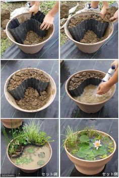A garden pond to make yourself, simply . Einen Gartenteich zum Selbermachen, einfach mit Seerose im Blume… DIY garden idea. A garden pond to make yourself, simply with a water lily in a flowerpot. Container Water Gardens, Container Gardening, Gardening Tips, Container Pond, Organic Gardening, Indoor Gardening, Plant Containers, Small Water Gardens, Indoor Pond