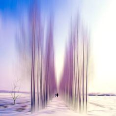 Buy One man and his dog II, a Manipulated on Canvas by Josh Adamski from Israel. It portrays: Landscape, relevant to: sky, blur, woods, colors, dog, abstract, landscape, man photo illustration