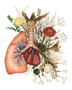 Giclee Print- 'Branching' Anatomical Watercolor Painting of Lung and Heart with Flowers by AnnekeWilderArtwork on Etsy https://www.etsy.com/listing/493289889/giclee-print-branching-anatomical