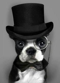 Doggie Steampunk!