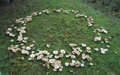Fairy rings have a rich folkloric background. In Europe, they've been called elf rings, witches rings and sorcerer's rings. Their tendency to occur in woodland areas have linked them with supernatural stories of fairies and other elusive creatures. Wicca, Fae Aesthetic, Spring Aesthetic, Fantasy Magic, The Ancient Magus Bride, Fairy Ring, Faeries, Folklore, Fairy Tales