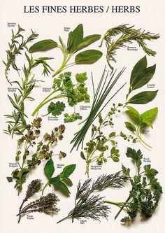 Herbs by katya., via Flickr