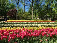 Se vc não gosta de flores está no insta errado! Ontem conhecemos Keukenhof em Lisse a meia hora de Amsterdam. Foi ma-ra-vi-lho-so!  É realmente o jardim mais lindo do mundo! #keukenhof #nofilter #holland #tulips #garden #flowers #flowerslovers #tulipslover #viagemjovem by viagemjovem