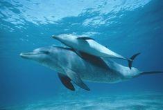Nadar con los delfines en la reserva natural de Sian Ka'an