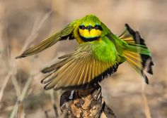 Birds of the Kruger National Park - the Kruger Park is a birder's paradise as there are over 500 species of birds that have been seen in the park! Kruger National Park, National Parks, Common Starling, Grey Heron, Bee Eater, Small Birds, Bird Species, Africa Travel, Wildlife Photography