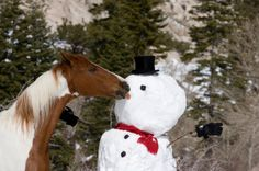 christmas horse....sorry frosty.  There goes your nose!
