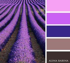 COLORS | VK Lavender fields purple violet pink tan dark brown mahogany