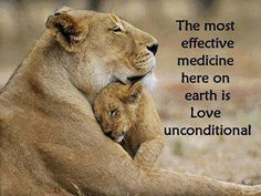 The most effective medicine here on earth is Love unconditional. Lioness Quotes, Baby Animals, Cute Animals, Plus Belle Citation, Share My Life, Endocannabinoid System, Here On Earth, Unconditional Love, Mothers Love