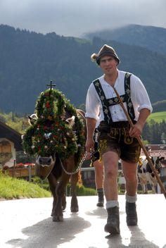 #Viehscheid #Oberstaufen