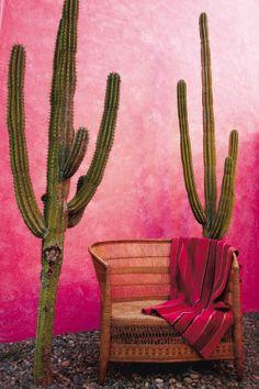 ♕cactus - The Mexican garden - Marie Claire Maison Murs Roses, Mexican Garden, Mexican Patio, Mexican Desert, Mexican Art, Cactus Y Suculentas, Southwest Style, Pink Walls, Ombre Walls