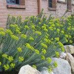 Top Ten Drought Tolerant Plants
