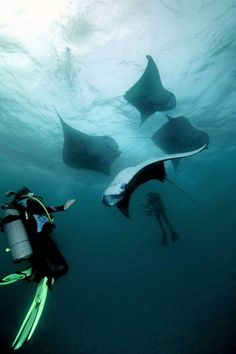 swim with manta rays - to come