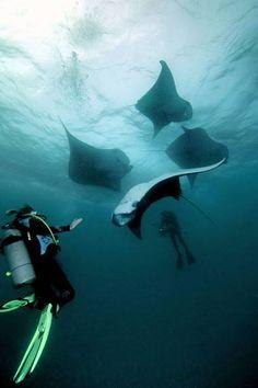 swim with manta rays
