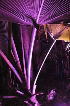 West Martello - Key West Garden Club - Key West, FL