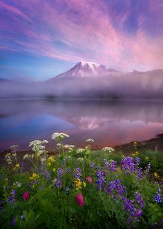 Mist, sunrise colors and wildflowers adorn the landscape near Mount Rainier and Reflection Lake.