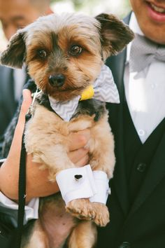#Puppy - All dressed in his wedding finery! See the wedding on SMP - http://www.StyleMePretty.com/2014/01/10/malibu-wedding-at-rancho-del-cielo/ Laura Goldenberger Photography