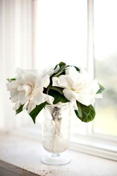 Next day delivery high end gardenia vines and blooms for sale, perfect for luxury gifts, home floral arrangements, and special occasions decoration. Amazing Flowers, White Flowers, Beautiful Flowers, White Roses, Fresh Flowers, Deco Floral, Arte Floral, Flower Power, Bouquets