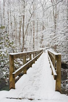 Winter Pictures Of The Smokies | Great Smoky Mountains National Park in Winter