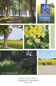 Aeblegaarden, Langeland, Denmark. We are situated right on the Cycle Route 80, which goes from Rudkobing to Lohals http://www.organicholidays.com/at/2371.htm