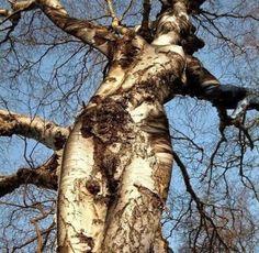 Ou vous vous promenez tranquillement dans la forêt quand soudain, vous tombez sur un arbre qui ressemble à une femme ou à une scène de crucifixion! | 18 photos inexpliquées qui vont vous faire flipper