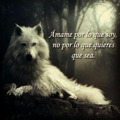 Mejores 218 Imagenes De Como Un Lobo En Pinterest Wolves Powerful