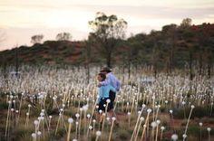 Field of Light art installation by internationally acclaimed artist Bruce Munro. the installation is at Uluru, Australia. March 2016.