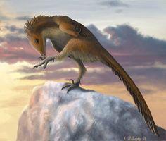 El troodóntido Talos sampsoni, cretácico superior de Utah. Es el dromeosaúrido más pequeño descubierto (2011): se supone que pesaba unos treinta y ocho kilogramos. Como todos los dromeosaurios, la falange intermedia de sus patas traseras tenía forma de hoz. Paleoarte de Emily Willoughby