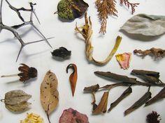 016Dead_Botany by Neville Trickett, via Flickr