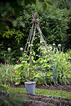rustic garden pyramid from dried branches...